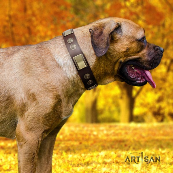 Cane Corso studded natural genuine leather collar with strong hardware