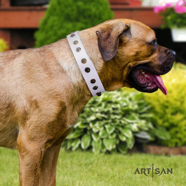Cane Corso full grain leather collar with rust-proof D-ring