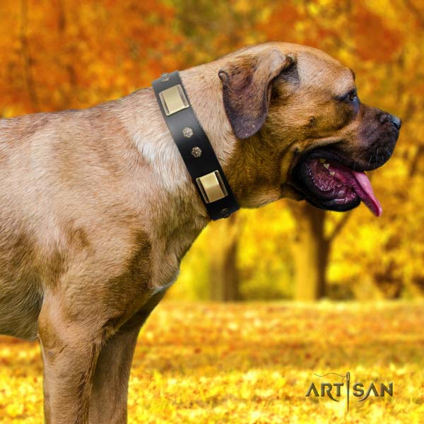 Cane Corso decorated full grain genuine leather collar with reliable hardware