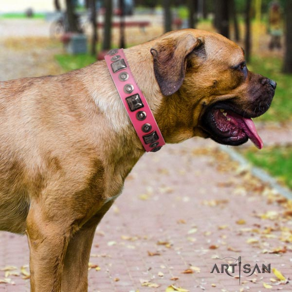 Cane Corso genuine leather collar with rust resistant hardware
