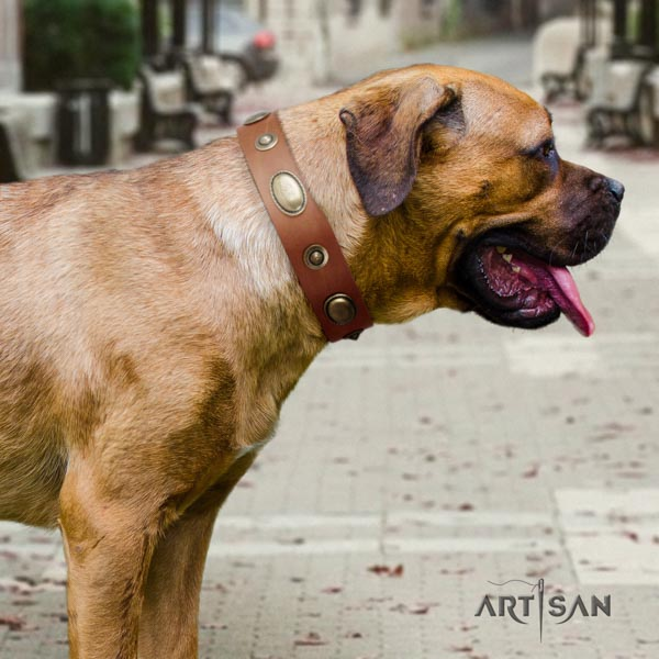 Cane Corso embellished leather collar with corrosion proof hardware