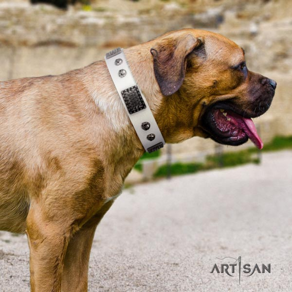 Cane Corso studded leather collar with durable hardware