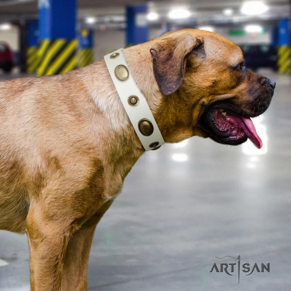 Cane Corso decorated full grain leather collar with rust-proof hardware