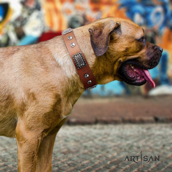 Cane Corso embellished full grain natural leather collar with reliable fittings