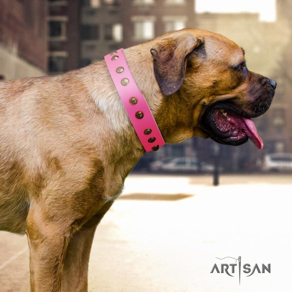 Cane Corso studded natural genuine leather collar with rust-proof fittings