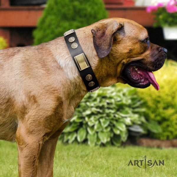 Cane Corso decorated leather collar with corrosion resistant D-ring