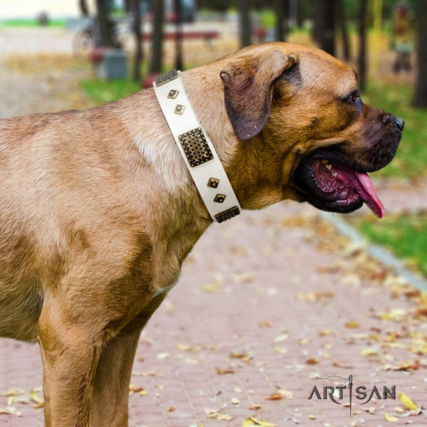Cane Corso adorned full grain natural leather collar with strong fittings