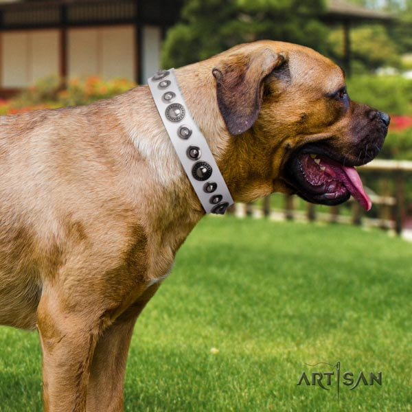 Cane Corso leather collar with corrosion proof fittings