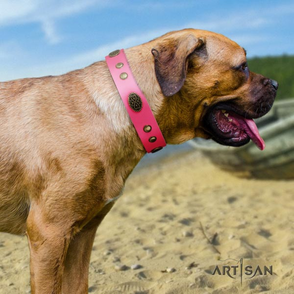 Cane Corso adorned full grain natural leather collar with durable D-ring