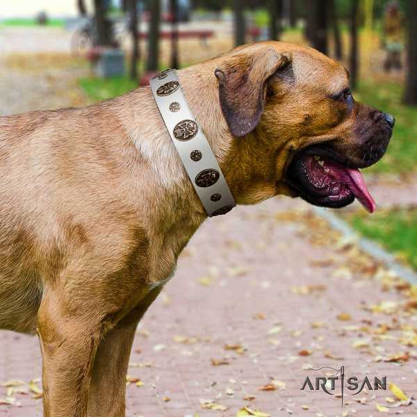 Cane Corso easy to adjust leather dog collar for everyday use