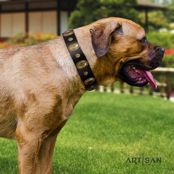 Cane Corso stunning full grain natural leather dog collar for comfortable wearing