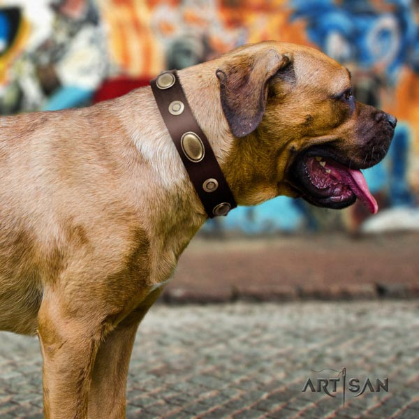 Cane Corso decorated leather collar with rust resistant buckle