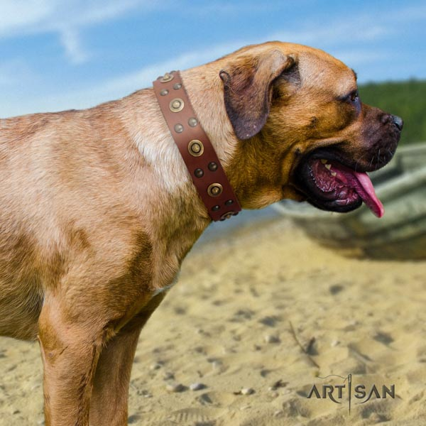 Cane Corso decorated full grain natural leather collar with durable hardware