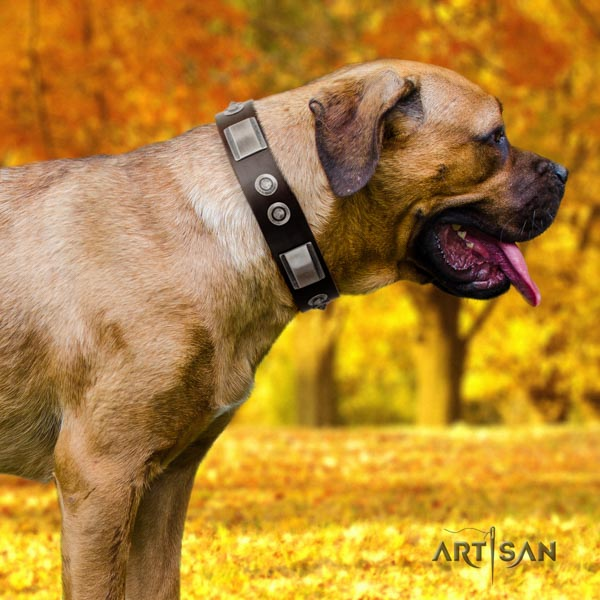 Cane Corso adorned leather collar with rust resistant buckle