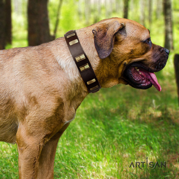 Cane Corso trendy full grain leather dog collar for fancy walking