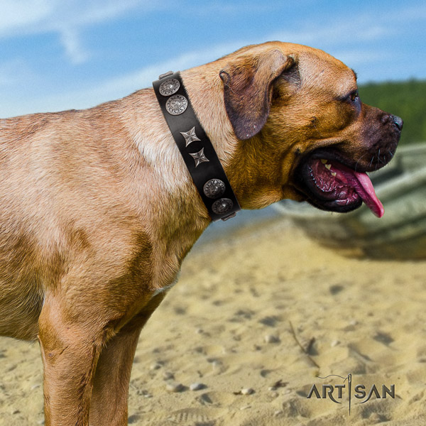 Cane Corso best quality genuine leather dog collar for easy wearing