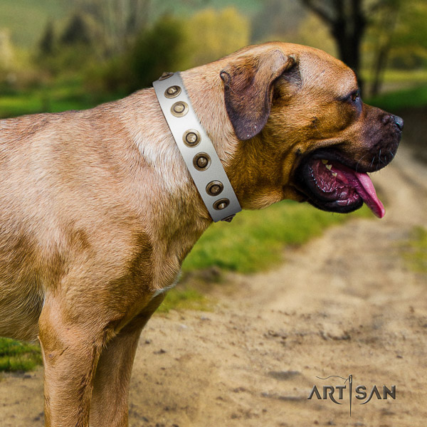 Cane Corso embellished genuine leather dog collar for stylish walking