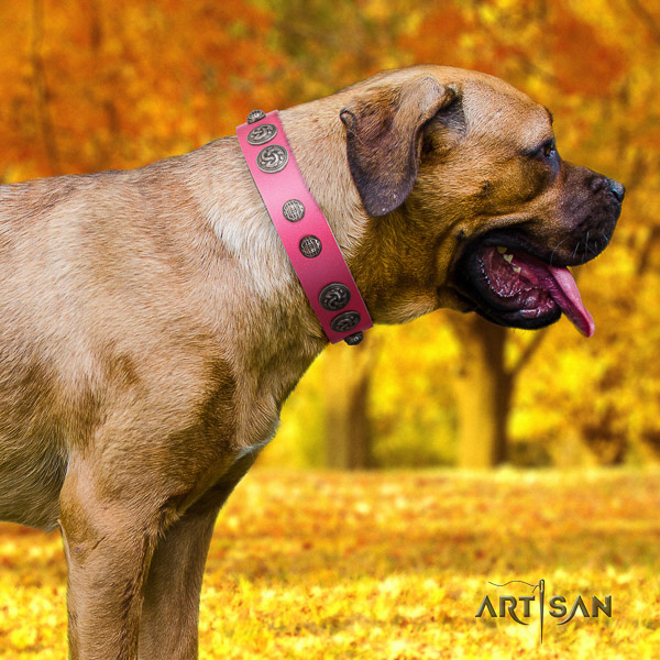 Cane Corso top notch full grain leather dog collar for everyday use