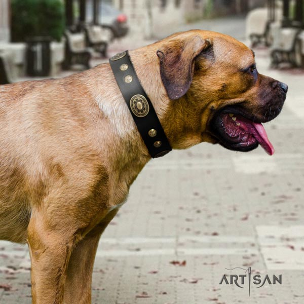 Cane Corso studded full grain leather collar with durable buckle