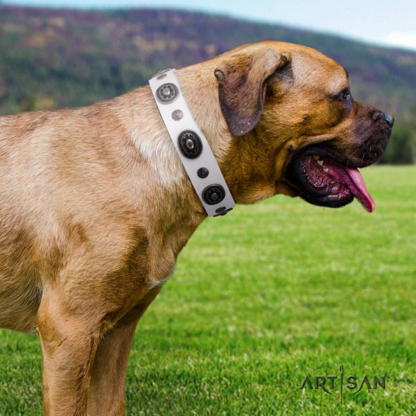 Cane Corso full grain leather collar with durable fittings