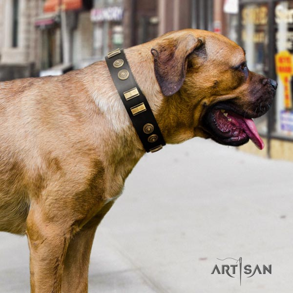Cane Corso embellished genuine leather collar with rust resistant fittings