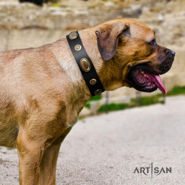 Cane Corso embellished full grain genuine leather collar with strong hardware