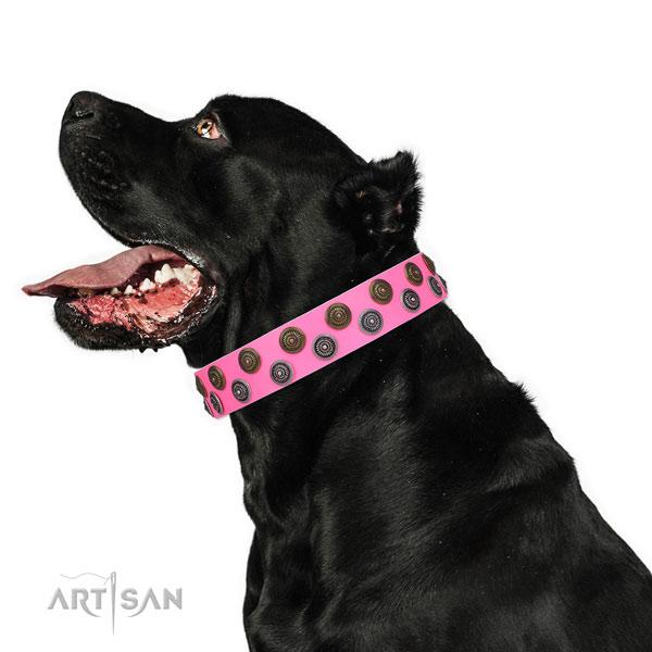 Cane Corso trendy natural genuine leather dog collar for basic training