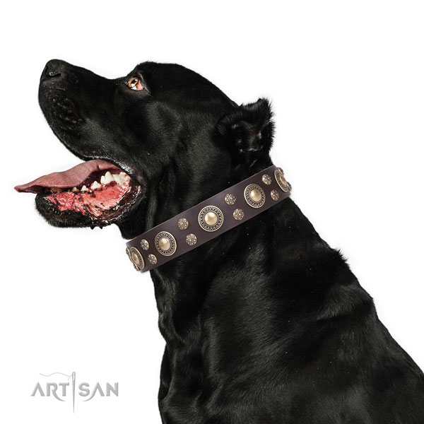 Cane Corso comfortable natural genuine leather dog collar for fancy walking