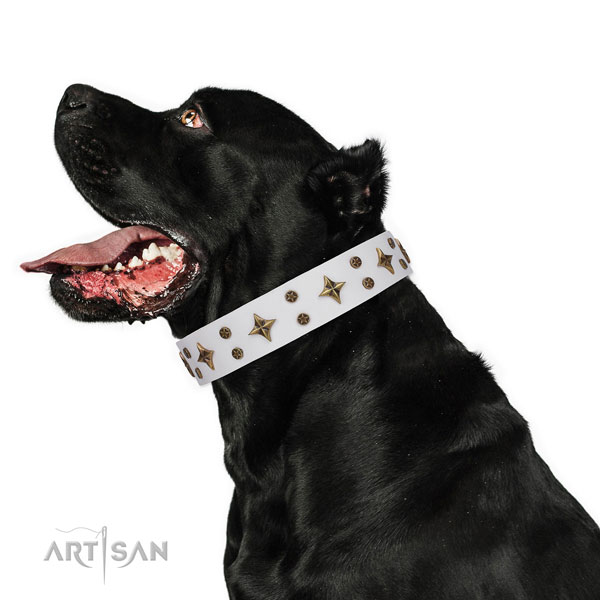 Cane Corso exquisite full grain genuine leather dog collar for basic training