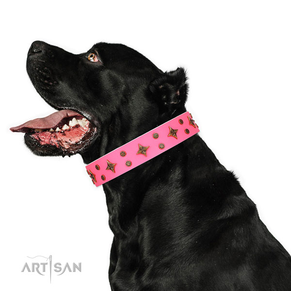 Cane Corso easy to adjust full grain leather dog collar for basic training