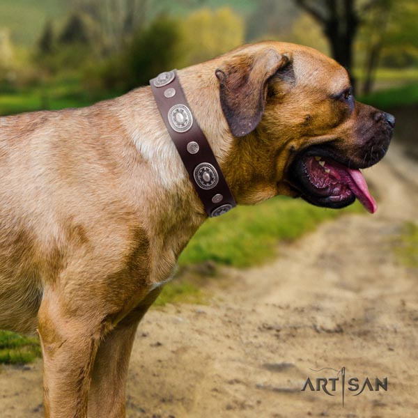 Cane Corso natural genuine leather collar with rust-proof D-ring