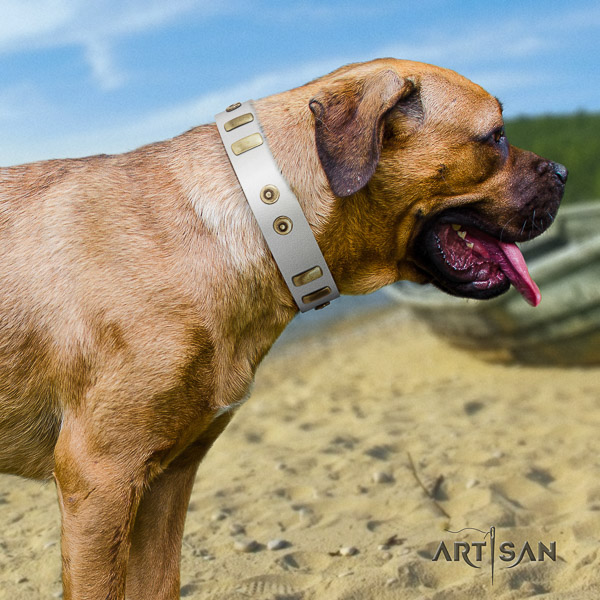 Cane Corso trendy full grain natural leather dog collar for basic training