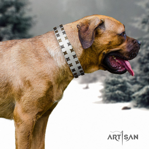 Cane Corso stylish natural genuine leather dog collar for stylish walking