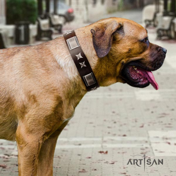 Cane Corso adorned full grain leather collar with rust resistant traditional buckle