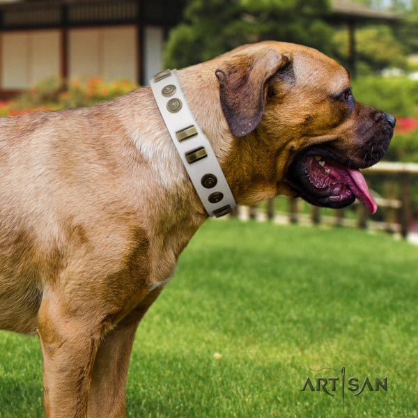 Cane Corso decorated full grain natural leather collar with corrosion resistant D-ring