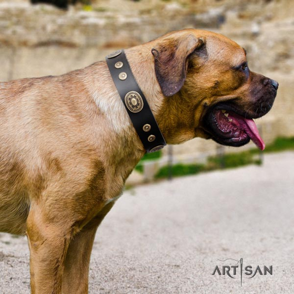 Cane Corso full grain genuine leather collar with corrosion proof traditional buckle