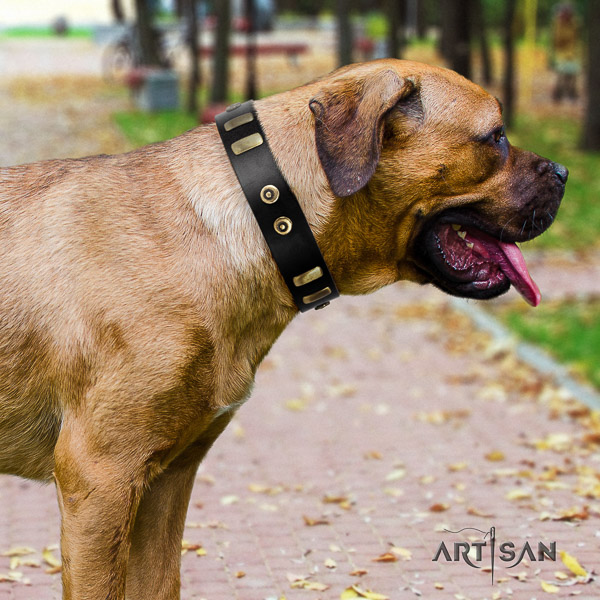 Cane Corso inimitable full grain natural leather dog collar for daily use