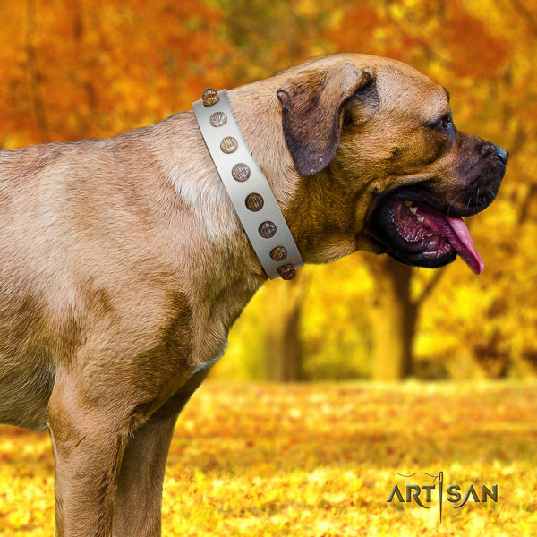 Cane Corso inimitable full grain natural leather dog collar for handy use