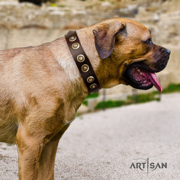 Cane Corso easy adjustable full grain natural leather dog collar for fancy walking