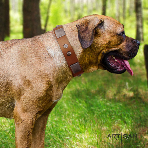 Cane Corso fashionable full grain leather dog collar for easy wearing