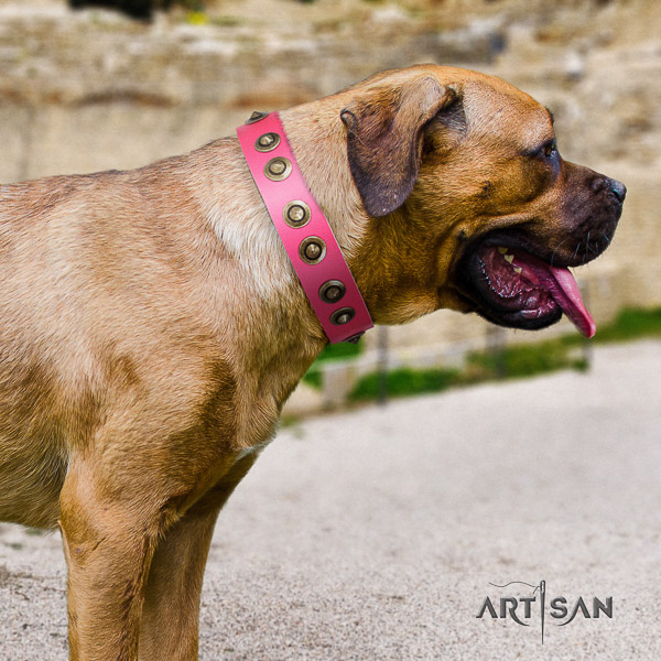 Cane Corso comfortable leather dog collar for basic training