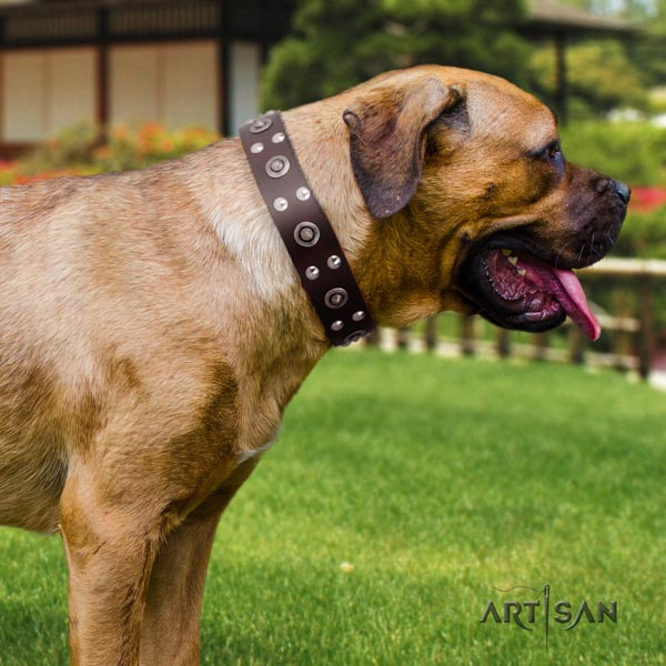 Cane Corso adorned full grain natural leather collar with rust-proof fittings