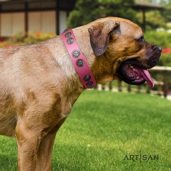 Cane Corso comfortable full grain leather dog collar for daily use