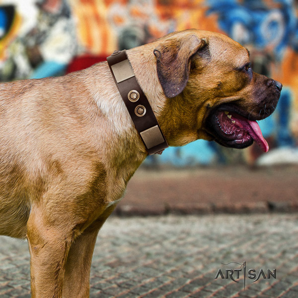 Cane Corso awesome leather dog collar for handy use