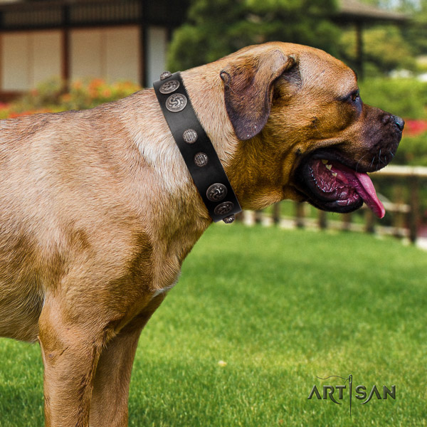 Cane Corso stylish leather dog collar for comfortable wearing