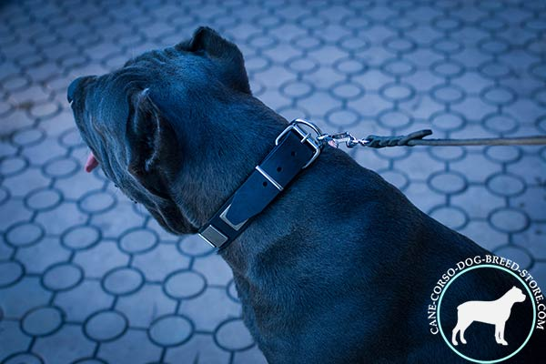 Cane Corso black leather collar with rust-proof hardware for improved control