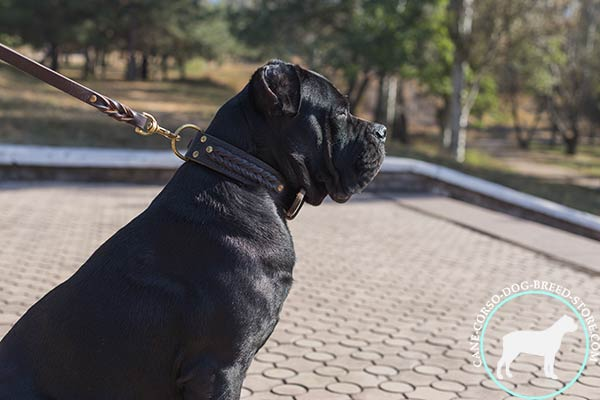 Cane Corso brown leather collar with strong hardware for basic training