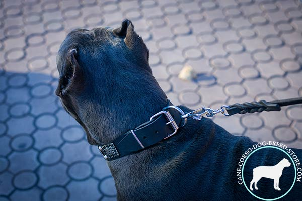 Cane Corso black leather collar with corrosion resistant fittings for perfect control