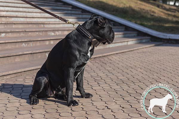 Cane Corso brown leather collar with rust-proof brass plated fittings for quality control