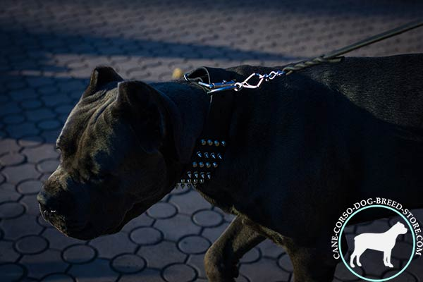 Cane Corso black leather collar with non-corrosive hardware for improved control